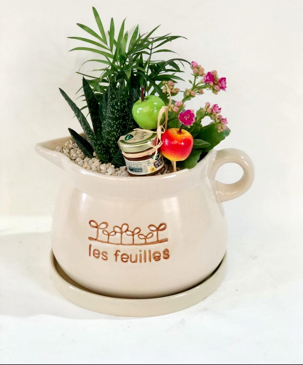 מיקס צמחים בכלי