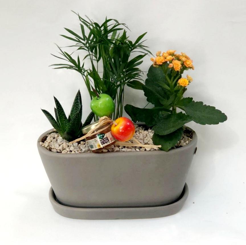 קוקטייל צמחים באדנית קרמיקה