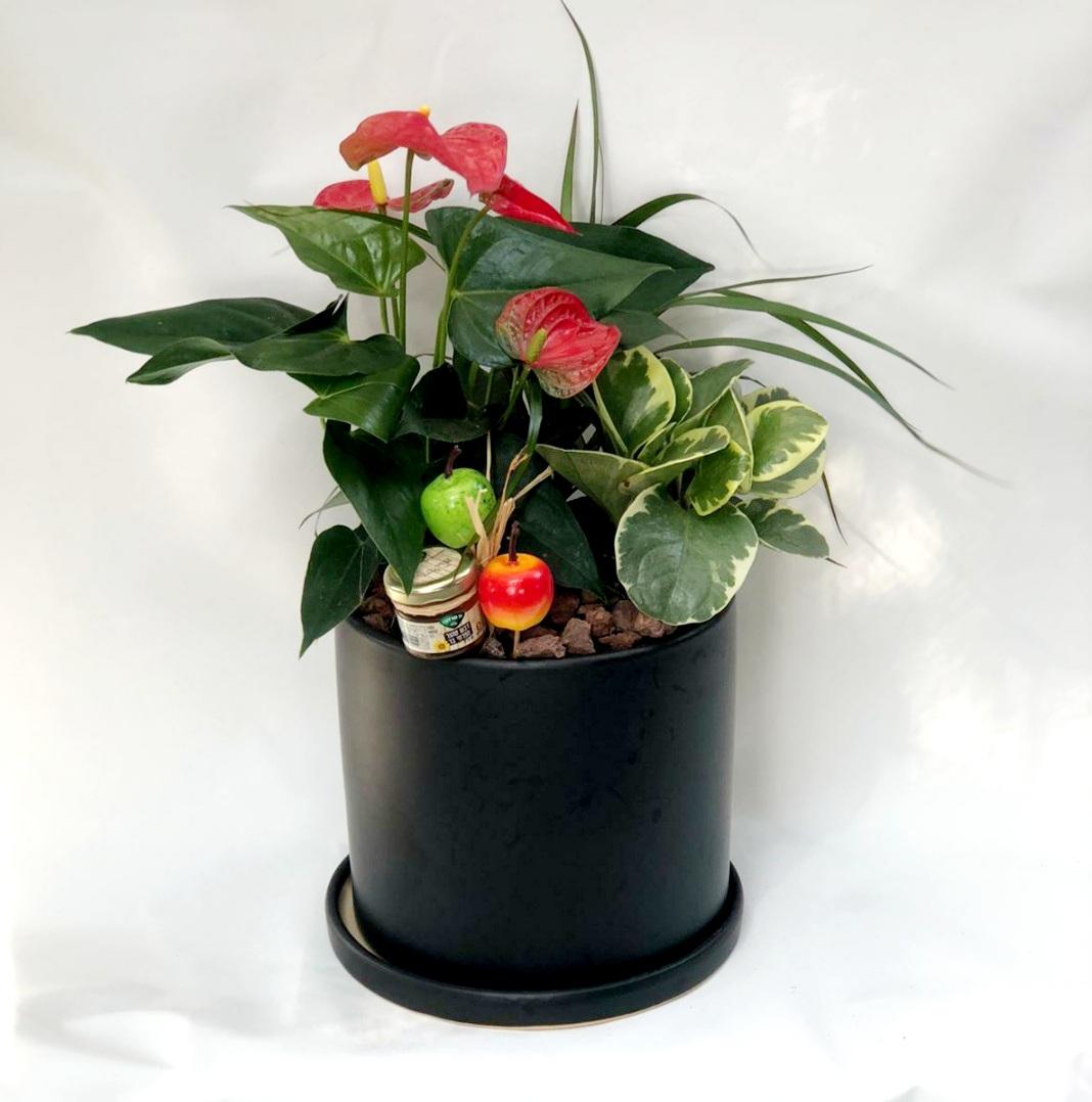 קוקטייל צמחים בכל קרמיקה