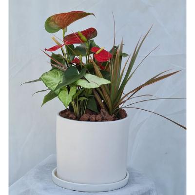 קוקטייל צמחים 1
