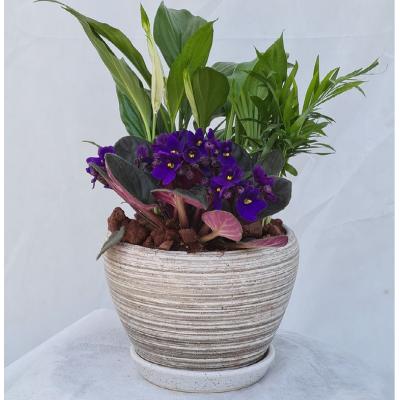 קוקטייל צמחים 9