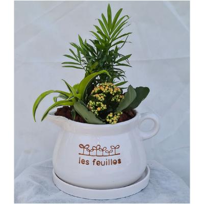 קוקטייל צמחים 12